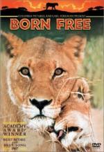 Born Free (1966) afişi