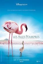 Pembe Kanatlar: Flamingolarin Gizemi