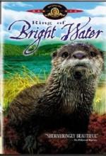 Ring Of Bright Water (1969) afişi