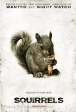 Squirrels  afişi