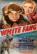 White Fang (I) (1936) afişi