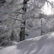 Kış Rüyası Resimleri