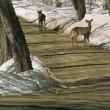 Deer Season Resimleri