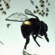 Vanishing Of The Bees Resimleri