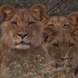 En Vahşi Avcılar: Dehşet Gecesi Resimleri