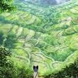 Guskoi Budorinin Hayatı Resimleri
