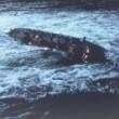 Poseidon Macerası Resimleri
