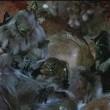 Gargoyles (tv) Resimleri