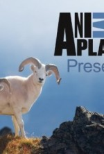 Animal Planet Presents (2013) afişi