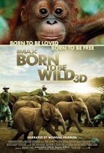Born To Be Wild (2011) afişi