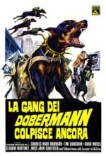 Doberman çetesi