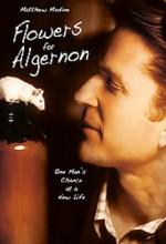Flowers For Algernon (1999) afişi