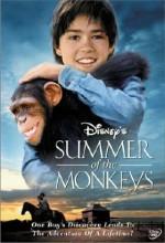 Maymunlarla Bir Yaz (1998) afişi