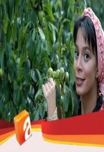 Naciye'yi Kim Sevmez? (2005) afişi