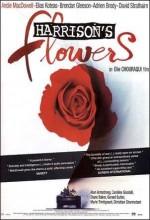 Umut Çicekleri (2000) afişi