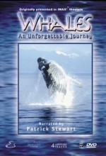 Whales: An Unforgettable Journey (1997) afişi