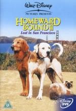 Yuvaya Dönüş 2 : Lost In San Francisco