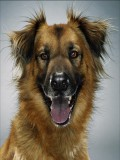 Jill The Dog profil resmi