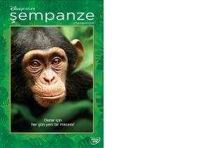 Chimpanzee Resimleri