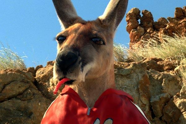 Kanguru Jack Resimleri 26
