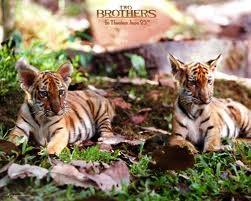İki Kardeş Resimleri