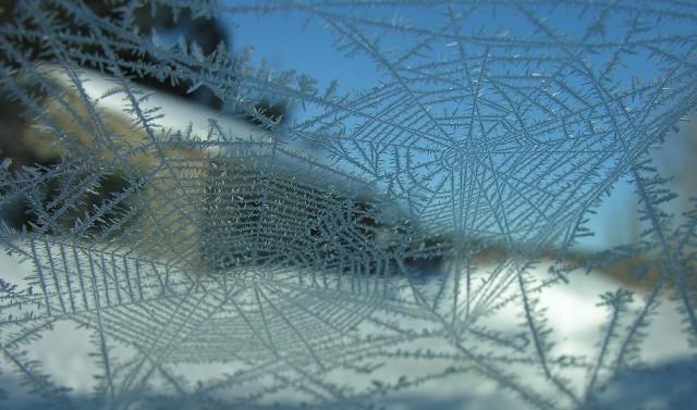 Buz Örümcekler Resimleri 4