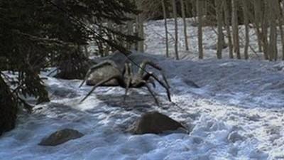 Buz Örümcekler Resimleri 5