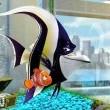 Kayıp Balık Nemo 3D Resimleri