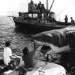 Jaws Resimleri 30