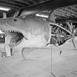 Jaws Resimleri 33