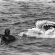 Jaws Resimleri 41