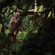King Kong Resimleri