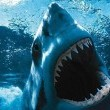 Shark Attack Resimleri
