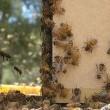 Vanishing Of The Bees Resimleri