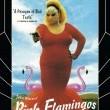Pembe Flamingolar Resimleri 3