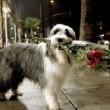 Bak Şu Köpeğe Resimleri