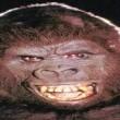 King Kong Resimleri 2