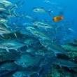 Okyanus Krallığı Resimleri