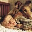Lassie Resimleri