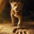 Aslan Kral Resimleri 2