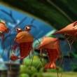 Cesur Balık Resimleri 7
