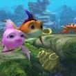 Cesur Balık Resimleri 8