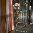 Kediler ve Köpekler Kitty Galore'un İntikamı Resimleri 17