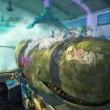 Köpekbalığı Hikayesi Resimleri 5