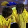 Çılgın Maymun Resimleri