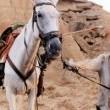 La Mancha'da Kaybolanlar Resimleri