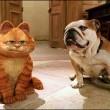 Garfield 2 Resimleri 11