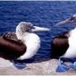 Galapagos: The Enchanted Voyage Resimleri 1