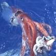 Kraken:tentacles Of The Deep Resimleri
