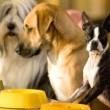 Köpek Oteli Resimleri